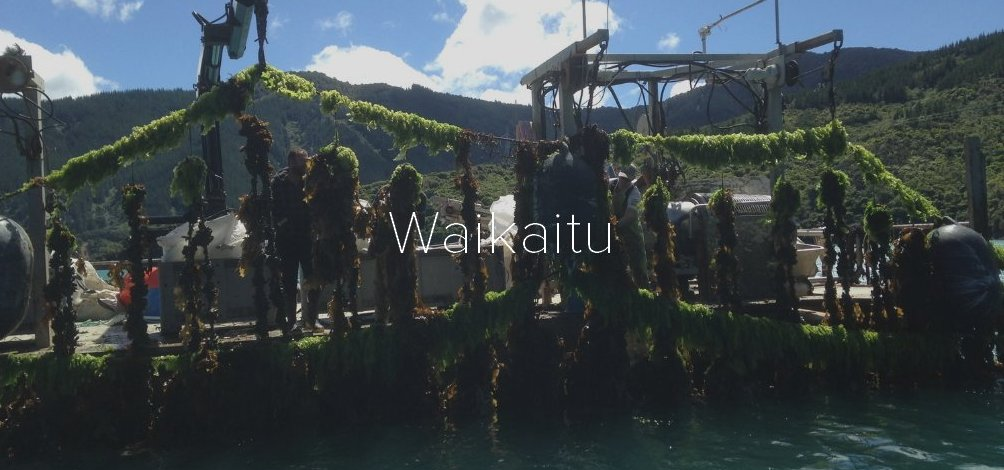 Waikaitu-Ltd_AsktheQ_Header