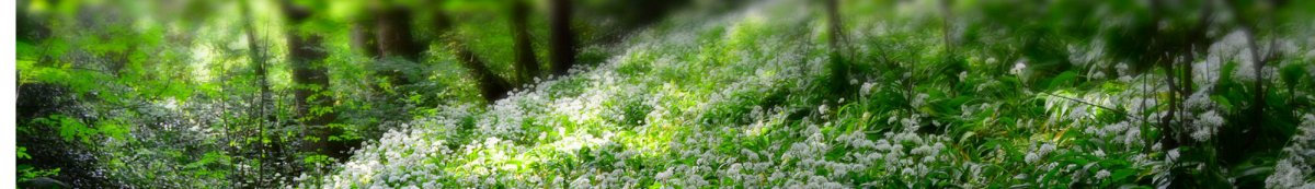 flowers_forest.1200